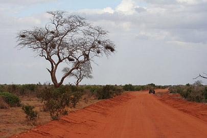 Fotoalbum von Malindi.info - Safari Tsavo East/West 2010[ Foto 41 von 145 ]