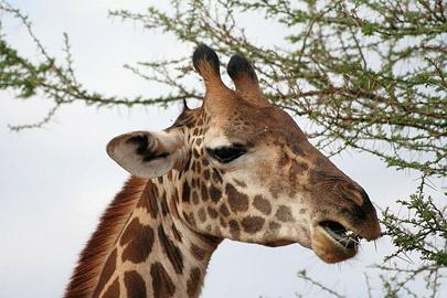 Fotoalbum von Malindi.info - Safari Tsavo East/West 2010[ Foto 42 von 145 ]