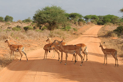 Fotoalbum von Malindi.info - Safari Tsavo East/West 2010[ Foto 46 von 145 ]