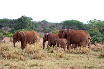 Fotoalbum von Malindi.info - Safari Tsavo East/West 2010[ Foto 48 von 145 ]
