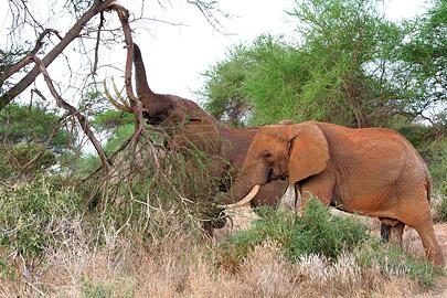 Fotoalbum von Malindi.info - Safari Tsavo East/West 2010[ Foto 50 von 145 ]