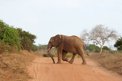 Fotoalbum von Malindi.info - Safari Tsavo East/West 2010[ Foto 52 von 145 ]