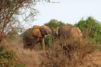 Fotoalbum von Malindi.info - Safari Tsavo East/West 2010[ Foto 53 von 145 ]