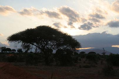 Fotoalbum von Malindi.info - Safari Tsavo East/West 2010[ Foto 58 von 145 ]