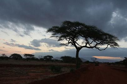 Fotoalbum von Malindi.info - Safari Tsavo East/West 2010[ Foto 60 von 145 ]