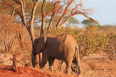 Fotoalbum von Malindi.info - Safari Tsavo East/West 2010[ Foto 63 von 145 ]