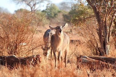 Fotoalbum von Malindi.info - Safari Tsavo East/West 2010[ Foto 66 von 145 ]