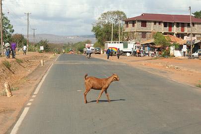Fotoalbum von Malindi.info - Safari Tsavo East/West 2010[ Foto 68 von 145 ]