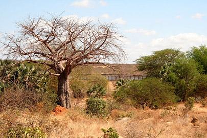 Fotoalbum von Malindi.info - Safari Tsavo East/West 2010[ Foto 71 von 145 ]