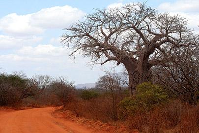 Fotoalbum von Malindi.info - Safari Tsavo East/West 2010[ Foto 95 von 145 ]