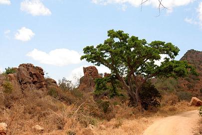 Fotoalbum von Malindi.info - Safari Tsavo East/West 2010[ Foto 99 von 145 ]