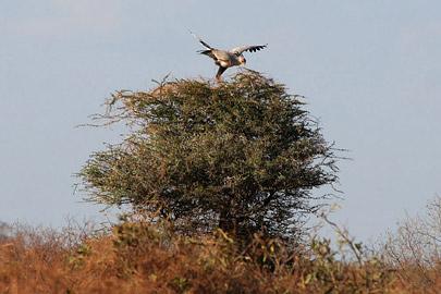 Fotoalbum von Malindi.info - Safari Tsavo East/West 2010[ Foto 111 von 145 ]