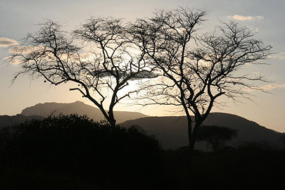 Fotoalbum von Malindi.info - Safari Tsavo East/West 2010[ Foto 114 von 145 ]