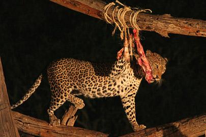 Fotoalbum von Malindi.info - Safari Tsavo East/West 2010[ Foto 118 von 145 ]