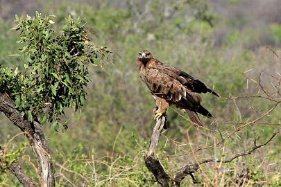Fotoalbum von Malindi.info - Safari Tsavo East/West 2010[ Foto 130 von 145 ]