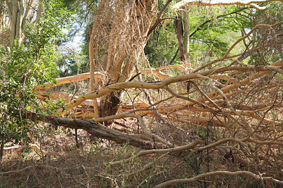 Fotoalbum von Malindi.info - Safari Tsavo East/West 2010[ Foto 137 von 145 ]