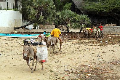 Fotoalbum von Malindi.info - Weihnachten 2010 in Lamu[ Foto 1 von 80 ]