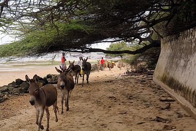 Fotoalbum von Malindi.info - Weihnachten 2010 in Lamu[ Foto 3 von 80 ]