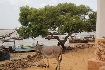 Fotoalbum von Malindi.info - Weihnachten 2010 in Lamu[ Foto 6 von 80 ]