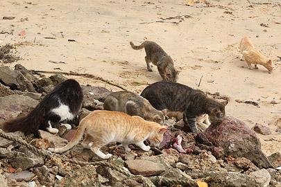Fotoalbum von Malindi.info - Weihnachten 2010 in Lamu[ Foto 7 von 80 ]