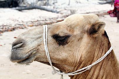 Fotoalbum von Malindi.info - Weihnachten 2010 in Lamu[ Foto 26 von 80 ]
