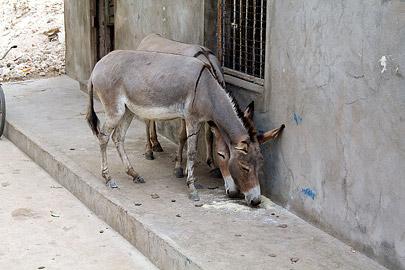 Fotoalbum von Malindi.info - Weihnachten 2010 in Lamu[ Foto 74 von 80 ]