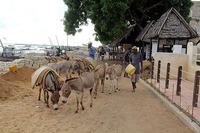 Fotoalbum von Malindi.info - Weihnachten 2010 in Lamu[ Foto 76 von 80 ]