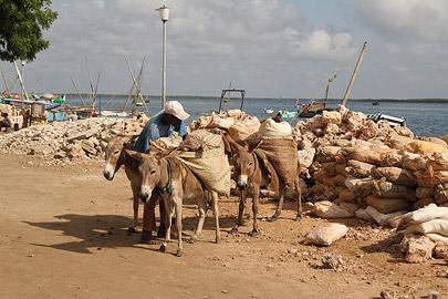 Fotoalbum von Malindi.info - Weihnachten 2010 in Lamu[ Foto 77 von 80 ]