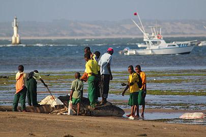 Fotoalbum von Malindi.info - Impressionen Malindi Januar 2011[ Foto 10 von 76 ]