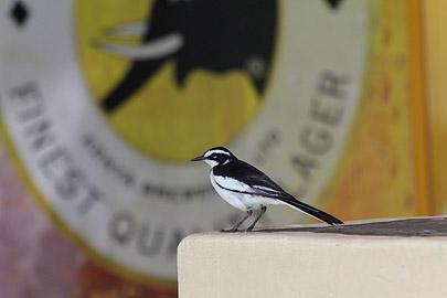 Fotoalbum von Malindi.info - Kenia Juli 2011[ Foto 67 von 121 ]
