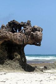 Fotoalbum von Malindi.info - Kenia Juli 2011[ Foto 96 von 121 ]