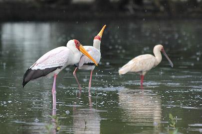 Fotoalbum von Malindi.info - Malindi & Mida Creek November 2011[ Foto 81 von 124 ]