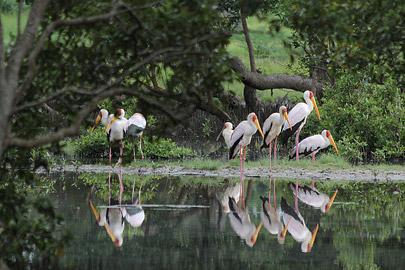 Fotoalbum von Malindi.info - Malindi & Mida Creek November 2011[ Foto 84 von 124 ]