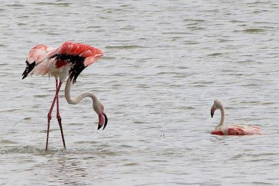 Fotoalbum von Malindi.info - Malindi & Mida Creek November 2011[ Foto 98 von 124 ]