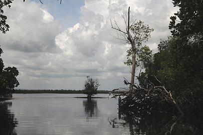Fotoalbum von Malindi.info - Malindi & Mida Creek November 2011[ Foto 118 von 124 ]