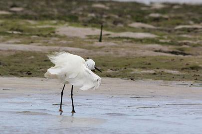 Fotoalbum von Malindi.info - Malindi & Mida Creek November 2011[ Foto 119 von 124 ]
