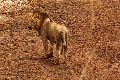 Fotoalbum von Malindi.info - Safari Tsavo East/West 2012[ Foto 3 von 98 ]
