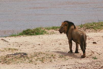 Fotoalbum von Malindi.info - Safari Tsavo East/West 2012[ Foto 4 von 98 ]