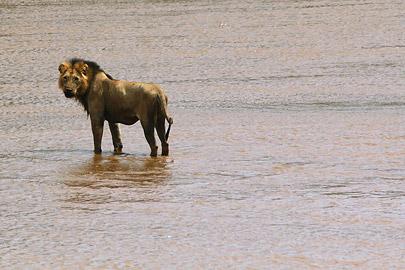 Fotoalbum von Malindi.info - Safari Tsavo East/West 2012[ Foto 5 von 98 ]
