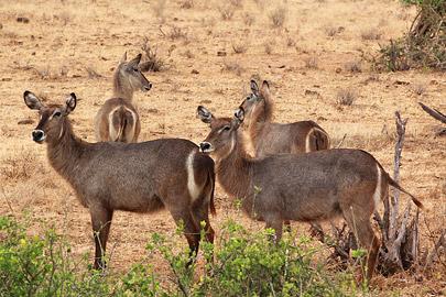 Fotoalbum von Malindi.info - Safari Tsavo East/West 2012[ Foto 6 von 98 ]