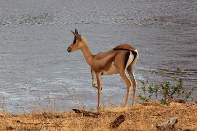 Fotoalbum von Malindi.info - Safari Tsavo East/West 2012[ Foto 8 von 98 ]
