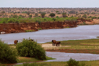 Fotoalbum von Malindi.info - Safari Tsavo East/West 2012[ Foto 13 von 98 ]