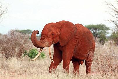 Fotoalbum von Malindi.info - Safari Tsavo East/West 2012[ Foto 19 von 98 ]