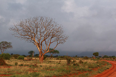 Fotoalbum von Malindi.info - Safari Tsavo East/West 2012[ Foto 22 von 98 ]