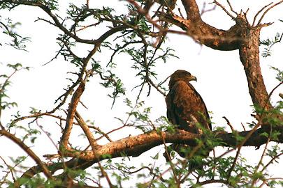 Fotoalbum von Malindi.info - Safari Tsavo East/West 2012[ Foto 23 von 98 ]
