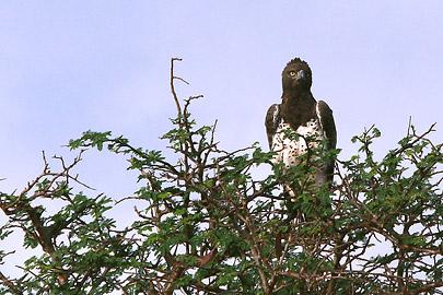 Fotoalbum von Malindi.info - Safari Tsavo East/West 2012[ Foto 25 von 98 ]