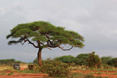 Fotoalbum von Malindi.info - Safari Tsavo East/West 2012[ Foto 26 von 98 ]