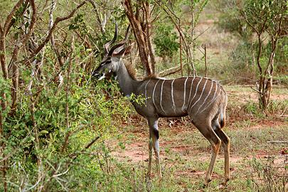 Fotoalbum von Malindi.info - Safari Tsavo East/West 2012[ Foto 28 von 98 ]