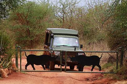 Fotoalbum von Malindi.info - Safari Tsavo East/West 2012[ Foto 39 von 98 ]