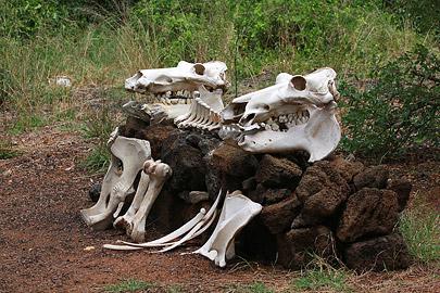 Fotoalbum von Malindi.info - Safari Tsavo East/West 2012[ Foto 45 von 98 ]